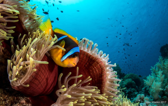 Is it too late for The Great Barrier Reef?
