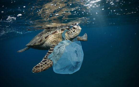 Conservation Success Stories