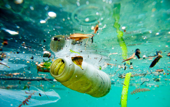 Microplastics in offshore fish – by Stiaan Immelman