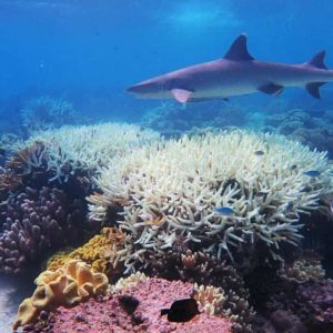 Interesting ways to combat coral bleaching